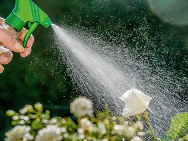 limiting pests landscaping areas