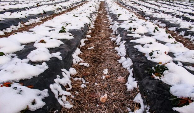 Protect Your Plants from Frost Heave with Mulch