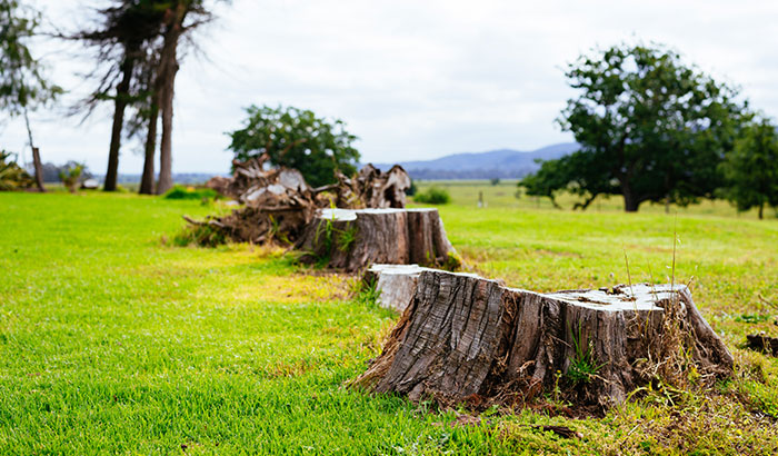 How-Can-I-Get-Rid-of-Trees-and-Stumps
